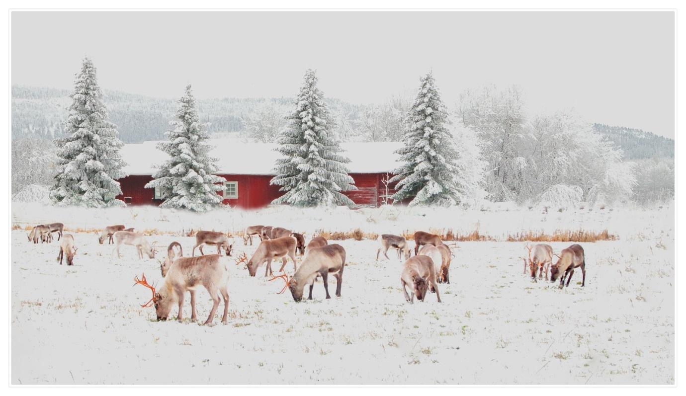 4_-_Napapiiri,_Lapland